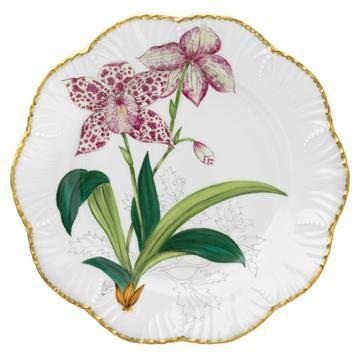 Histoires d'Orchidées