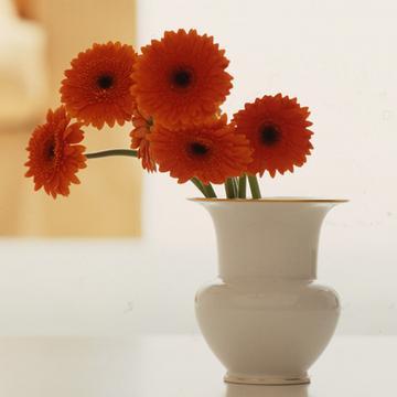 """""""Fidibus"""" vases"""